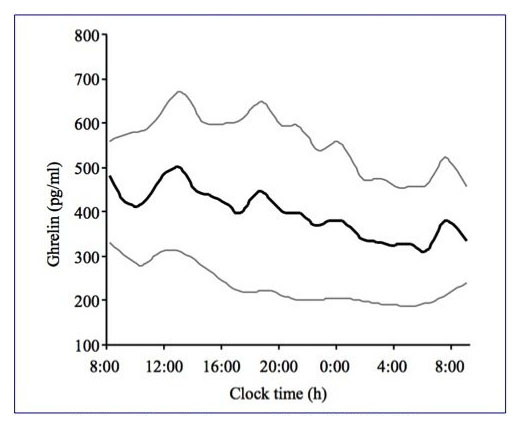 Overall eveolution of ghrelin during a 33 hours fast